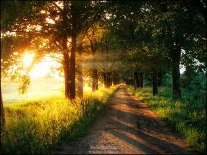 German countryside 4