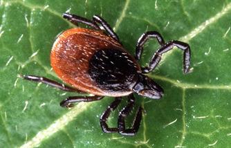 Lyme disease 22