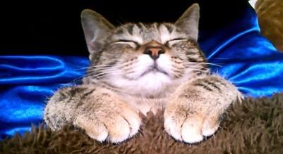 Cat 111