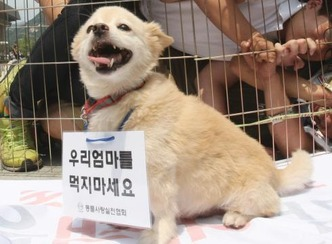 Korean dog 2