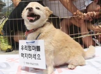 Korean dog 2