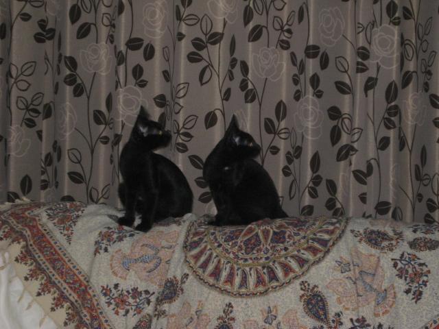 ソファの上で仲良し