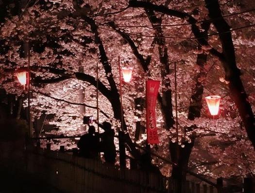 上田城址公園夜桜見物0_20170414 (2)