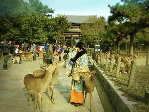 奈良公園の鹿 (1)