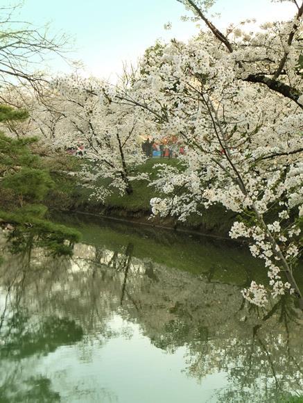 上田城址公園の桜_20170416 (3)