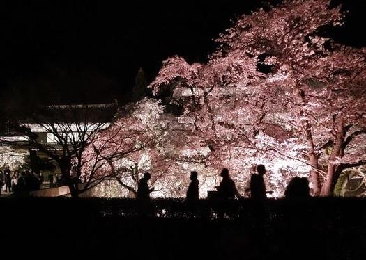 上田城址公園夜桜見物1_20170414 (5)