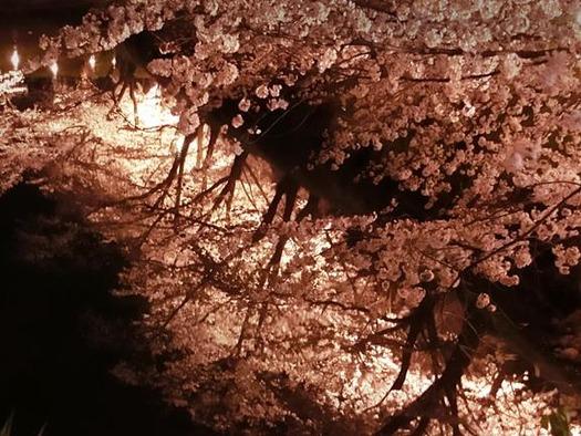 上田城址公園夜桜見物3_20170414 (29)