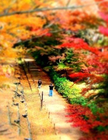 11月の上田公園 (2)