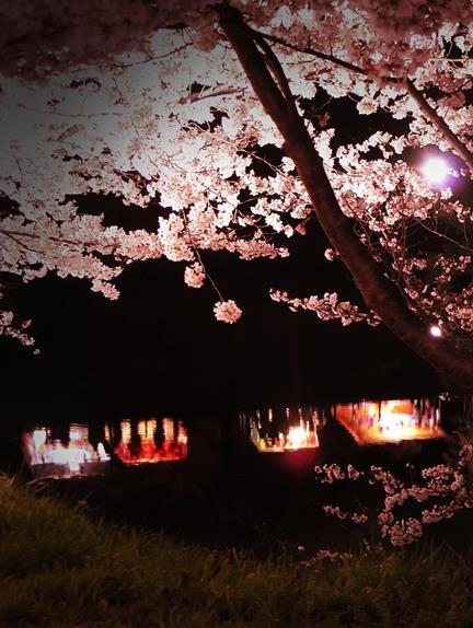 上田城址公園夜桜見物3_20170414 (31)