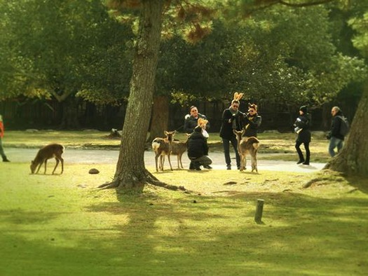 奈良公園の鹿 (8)