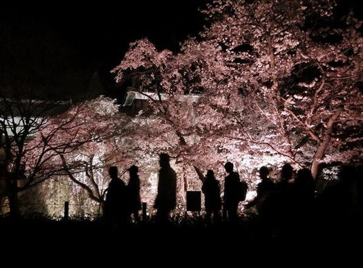 上田城址公園夜桜見物1_20170414 (4)