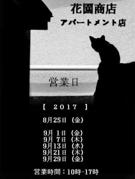 多磨霊園の黒猫