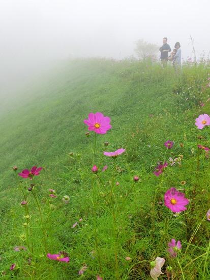 内山牧場の大コスモス園 (5)