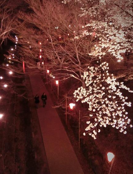 上田城址公園夜桜見物0_20170414 (3)