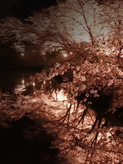 上田城址公園夜桜見物3_20170414 (30)