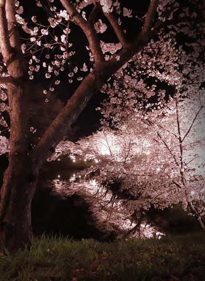 上田城址公園夜桜見物3_20170414 (28)