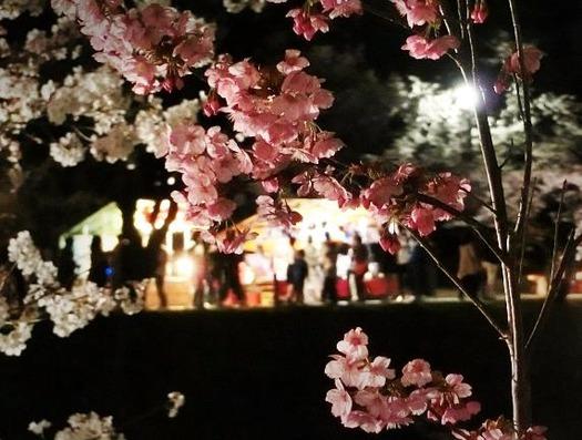 上田城址公園夜桜見物3_20170414 (23)