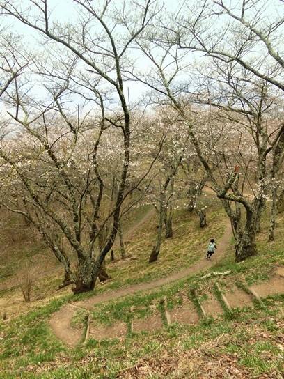 光城山森林公園 (1)
