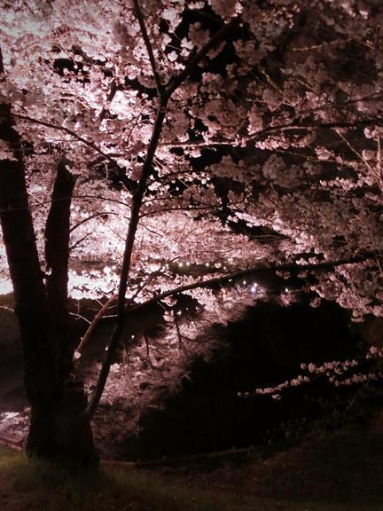 上田城址公園夜桜見物3_20170414 (27)