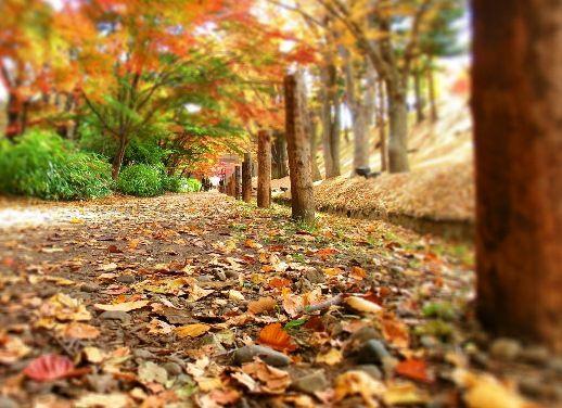 11月の上田公園 (9)
