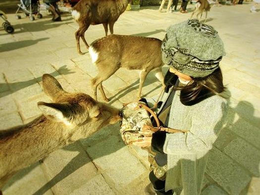 奈良公園の鹿 (5)