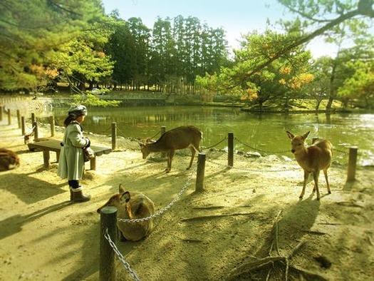 奈良公園の鹿 (3)