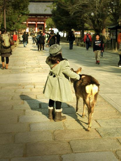 奈良公園の鹿 (4)