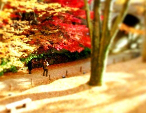 11月の上田公園 (5)