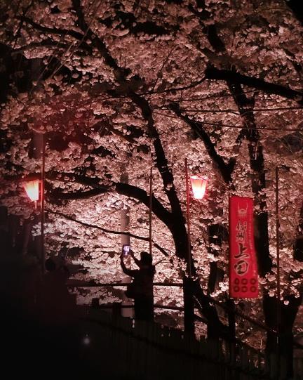 上田城址公園夜桜見物0_20170414 (1)