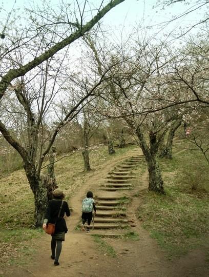光城山森林公園 (4)