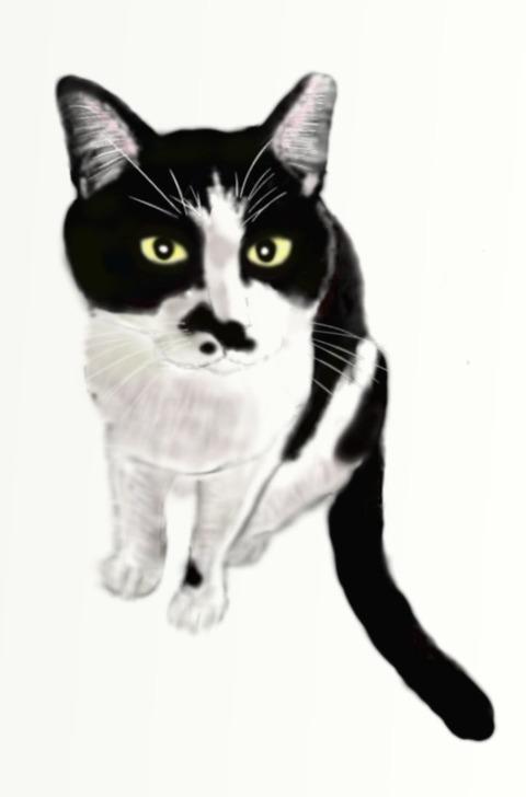 水野猫黒白全身
