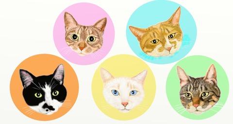 水野猫5匹