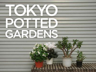 Tokyo Potted Gardens �������ȭ Nemury
