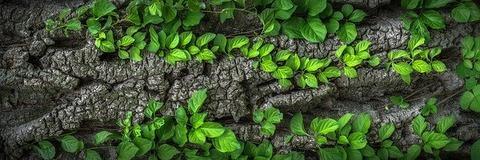 wood-1350175_640