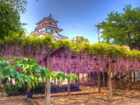 唐津城と藤HDR1ブログ用削除おk