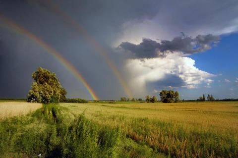 天気雨になると狐の嫁入り…狐の嫁入り見たら何か起こる?