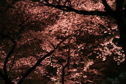 cherrytree-night-016