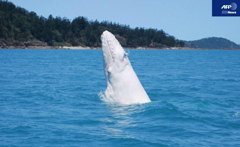 ザトウクジラの画像 p1_33
