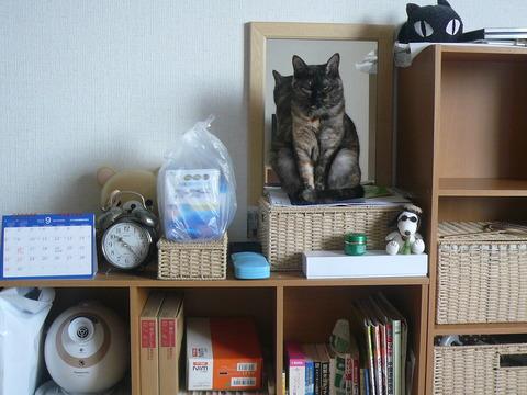 28猫の置物