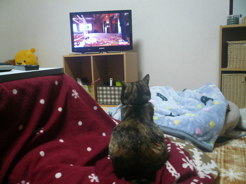 13テレビ1