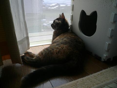 19窓辺のサビィ2