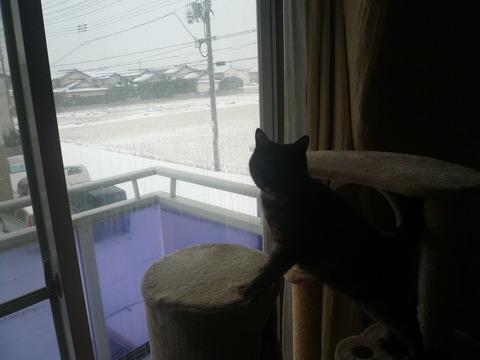 25雪!1