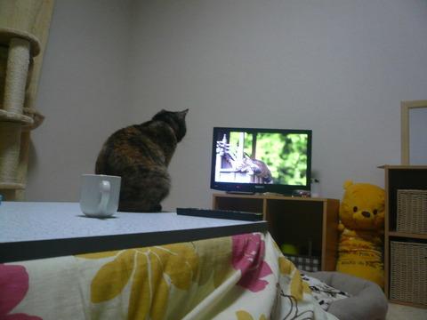 29テレビ1