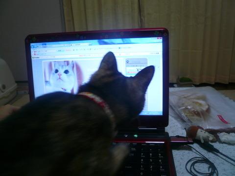 5猫ブログを見る猫