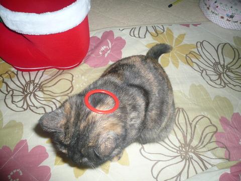 24クリスマスプレゼント11(天使の輪)
