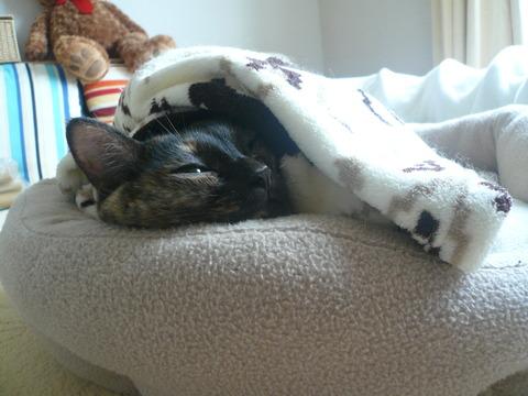 12猫ベッド7