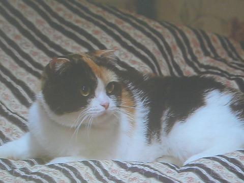 28三毛猫ホームズ1