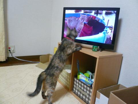 10猫を観る5