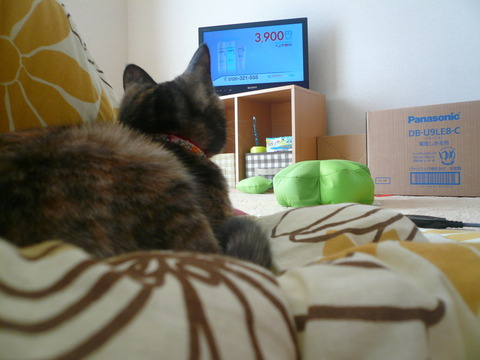 3テレビ見てます