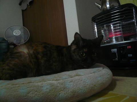 13ストーブ猫4